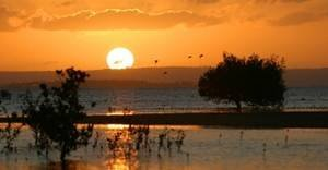 Flamingo_inhambane4